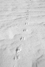 mousetracksbigthumb